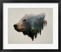 Framed Pacific Northwest Black Bear
