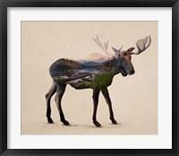 Framed Alaskan Bull Moose