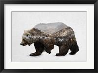 Framed Kodiak Brown Bear