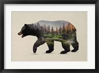 Framed North American Black Bear
