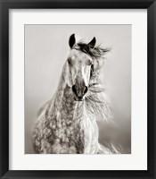 Framed Caballo de Andaluz