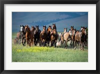 Framed Montana Thunder
