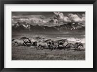 Framed Mountain Range Mavericks