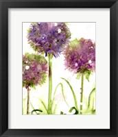 Framed Alliums