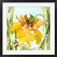 Framed Daffodil