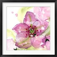 Framed Pink Flower in the Snow