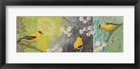 Framed Goldfinches Blooming