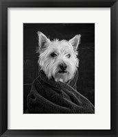 Framed Portrait of a Westy Dog