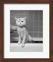 Framed Bert's Bath
