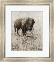 Framed Lone Buffalo