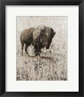 Framed Lone Buffalo