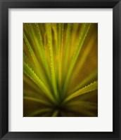 Framed California Monocot