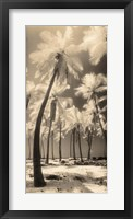 Framed Palm Shadows I