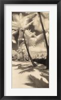 Framed Palm Shadows II
