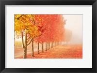 Framed Fall Trees in the Mist