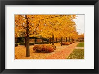 Framed Fall Walkway