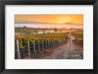 Framed Vineyard Sunrise