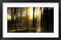 Framed Autumn Lights