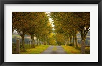 Framed Colors of Autumn