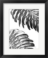Framed Double Philodendron (BW)