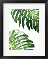 Framed Double Philodendron (color)
