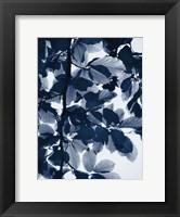 Framed Indigo Leaves