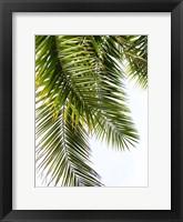 Framed Palm Leaves
