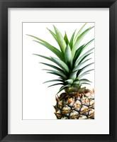 Framed Pineapple (color)