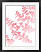 Framed Pink Maidenhair