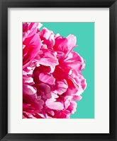 Framed Pink Peony