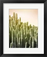 Framed Pink Sky Cactus
