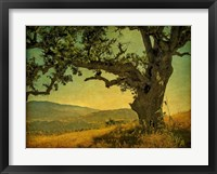 Framed Blue Oak Hilltop