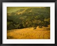 Framed Oak and Fence