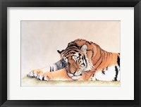 Framed Sleeping Tiger