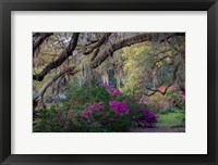 Framed Oaks and Azaleas