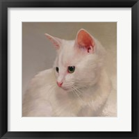Framed White Kitten