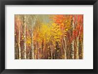 Framed Tangled Colors
