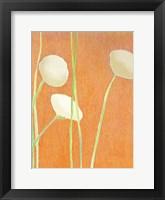 Framed Cream Flowers on Orange