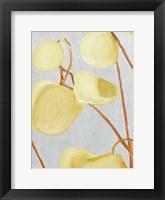 Framed Milkweed on Pale Gray