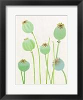Framed Poppy Pods on Ecru