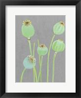 Framed Poppy Pods on Grey