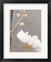 Framed White Flower on Medium Gray