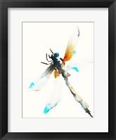 Framed Blue & Brown Dragonfly