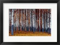 Framed Autumn Forest