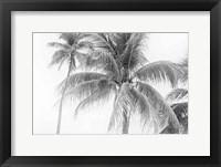 Framed Breezy II