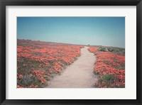 Framed California Blooms IV