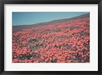 Framed California Blooms III