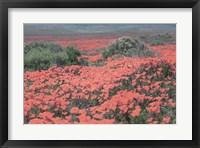 Framed California Blooms II