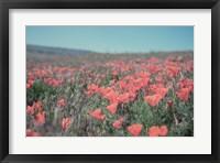 Framed California Blooms I