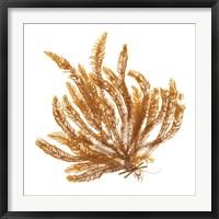 Framed Pacific Sea Mosses VII White Sq